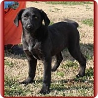 Adopt A Pet :: Spice Girl (In New England) - Brattleboro, VT