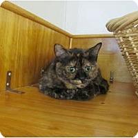 Adopt A Pet :: Xephyr - Pascoag, RI