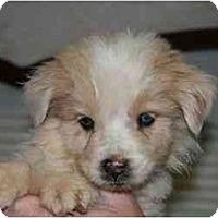 Adopt A Pet :: Carson - Mesa, AZ