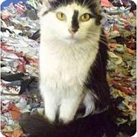 Adopt A Pet :: Melissa - New York, NY