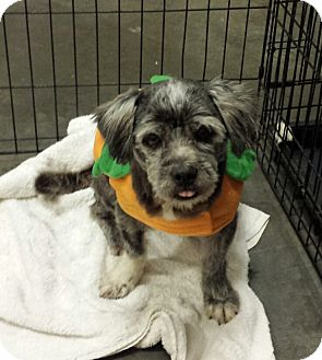 Terrier (Unknown Type, Small) Mix Dog for adoption in Alexis, North Carolina - Socks