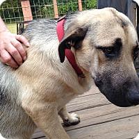 Adopt A Pet :: Duke - Somers, CT