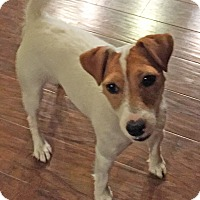 Adopt A Pet :: Minnie In Tulsa, OK - Oklahoma City, OK