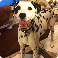 Adopt A Pet :: Bongo - Newcastle, OK