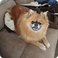 Adopt A Pet :: Nellie - Chewelah, WA