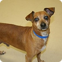 Adopt A Pet :: Skeeter/GA - Columbia, TN