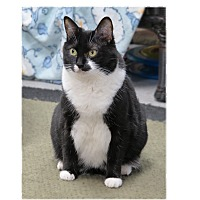 Adopt A Pet :: Gretel - San Carlos, CA