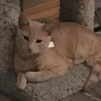 Adopt A Pet :: Don Lockwood - Bloomington, IL