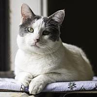 Adopt A Pet :: TAAZEN - Kyle, TX