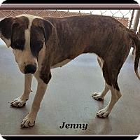 Adopt A Pet :: Jenny - Tombstone, AZ
