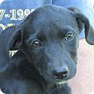 Adopt A Pet :: Paisley