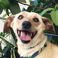 Adopt A Pet :: RYDER - pasadena, CA