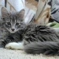 Adopt A Pet :: Aspen - Athabasca, AB