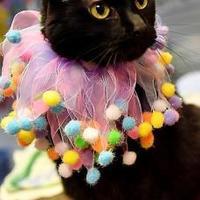 Adopt A Pet :: Mya - Corvallis, OR