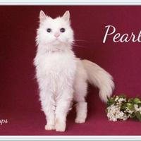 Adopt A Pet :: Pearl - Salem, OR