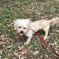Adopt A Pet :: Juliette - East Hartford, CT