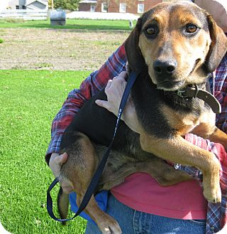 Beagle Mix Dog for adoption in Monterey, Virginia - Poppy