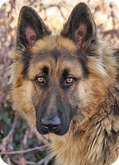 German Shepherd Dog Mix Dog for adoption in Los Angeles, California - Baron von Bend