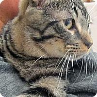 Adopt A Pet :: Omega - Riverhead, NY
