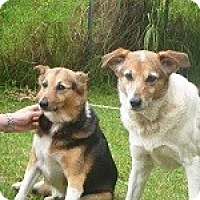 Adopt A Pet :: Kula - Honolulu, HI