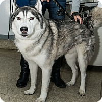 Adopt A Pet :: Kahn - New York, NY