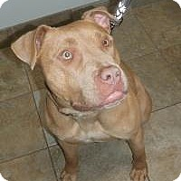Adopt A Pet :: Sierra - Park Ridge, NJ