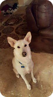 German Shepherd Dog Dog for adoption in SAN ANTONIO, Texas - SIERRA