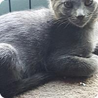 Adopt A Pet :: Smoky - Pasadena, CA