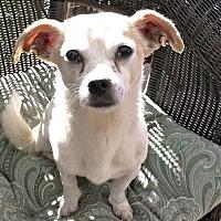 Adopt A Pet :: Cubby - Costa Mesa, CA