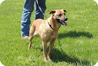 Terrier (Unknown Type, Medium) Mix Dog for adoption in Sullivan, Missouri - Mimosa