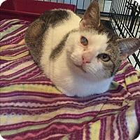 Adopt A Pet :: Queenie - Plattekill, NY
