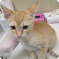 Adopt A Pet :: Spikey - Irving, TX