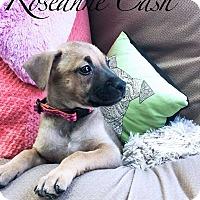Adopt A Pet :: Roseanne Cash - Allen, TX