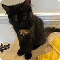 Adopt A Pet :: Bobbie - Prescott, AZ