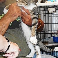 Adopt A Pet :: Twenty-Four - Parkton, NC