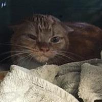 Adopt A Pet :: Cuqui - Windsor, CT