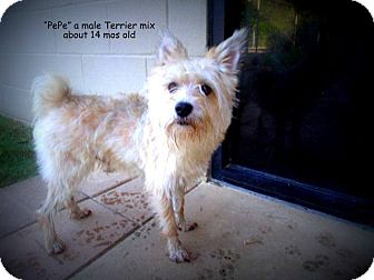 Terrier (Unknown Type, Medium) Mix Dog for adoption in Gadsden, Alabama - Pepe