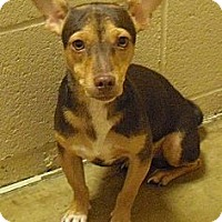 Adopt A Pet :: Jackson - Wickenburg, AZ