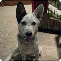 Adopt A Pet :: Conner - Phoenix, AZ