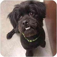 Adopt A Pet :: Grover - Phoenix, AZ