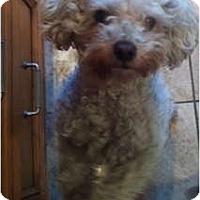 Adopt A Pet :: Cici - Oceanside, CA