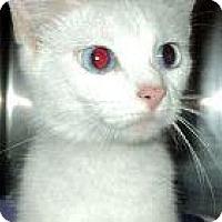 Adopt A Pet :: Stella - Xenia, OH