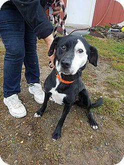Terrier (Unknown Type, Medium) Mix Dog for adoption in Bloomingburg, New York - Tyson