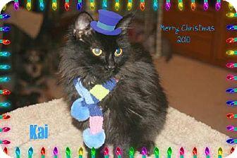 Domestic Longhair Cat for adoption in Vacaville, California - Kai