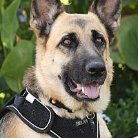 Adopt A Pet :: Misty von Moss - Los Angeles, CA