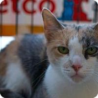 Adopt A Pet :: Philomena - New York, NY