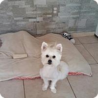 Adopt A Pet :: Niko - Brea, CA