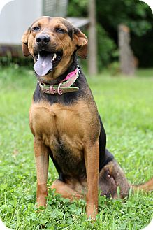 Hound (Unknown Type)/Rottweiler Mix Dog for adoption in Waldorf, Maryland - Caroline