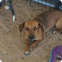 Adopt A Pet :: ANNA - Riverside, CA