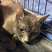 Adopt A Pet :: Felicity - Loogootee, IN